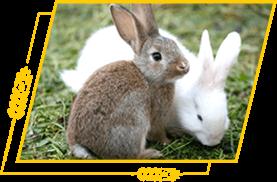 Бройлерные кролики