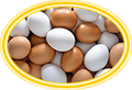 яйца для индюшат