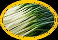 зеленый лук для индюшат